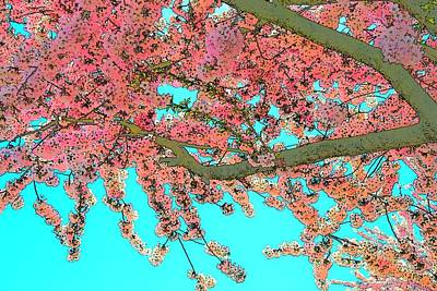 Jerry Sodorff Royalty-Free and Rights-Managed Images - Amity Cherry Blossoms by Jerry Sodorff