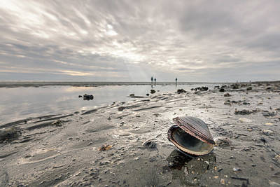 Achieving - An open, empty sea shell lying on the beach of Grado on a cloudy day in late autumn by Stefan Rotter