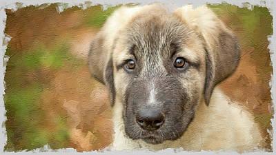 Photograph - Anatolian Shepherd Puppy II by SL Ernst