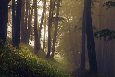 Everett Collection - Ancient Forest by Evgeni Dinev