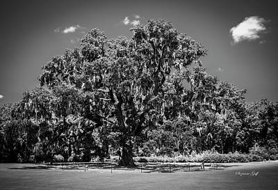 Wild Weather - Ancient Live Oak in Black and White by Suzanne Gaff