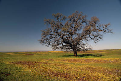 Fruits And Vegetables Still Life - Ancient Solitary Oak by Frank Wilson