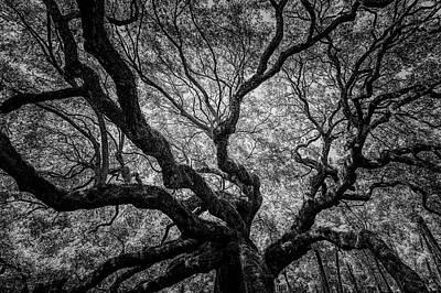 Photograph - Angel Oak-Monochrome by Christopher Nelson