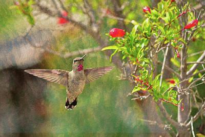 Animals Photos - Annas Hummingbird 1 by Linda Brody