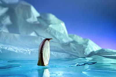 Photograph - Antarctic garlic penguin by Cacio Murilo De Vasconcelos