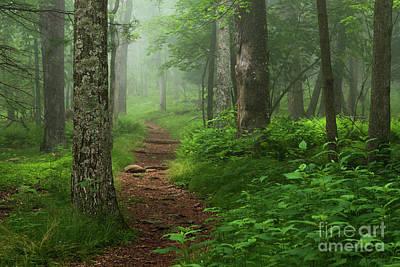 Photograph - Appalachian Trail in fog by Brandon Adkins
