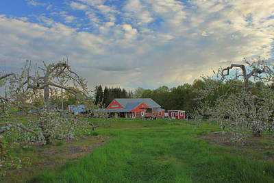 David Bowie Royalty Free Images - Apple Blossoms at Red Apple Farm Royalty-Free Image by John Burk
