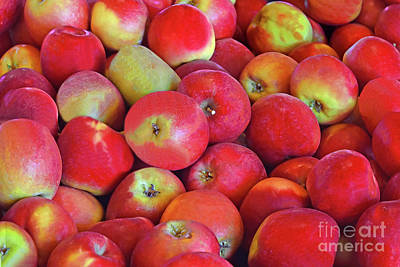 Gaugin Rights Managed Images -  Apple Harvest Bounty NJ  Royalty-Free Image by Regina Geoghan