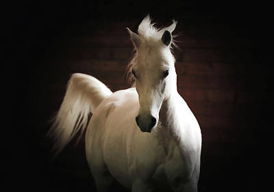 Anne Geddes Collection - Arabian Horse Art by Athena Mckinzie
