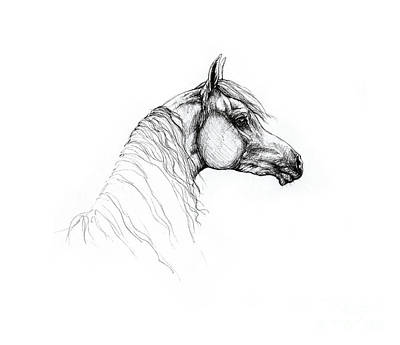 Animals Drawings - Arabian Horse Drawing 11 by Angel Ciesniarska