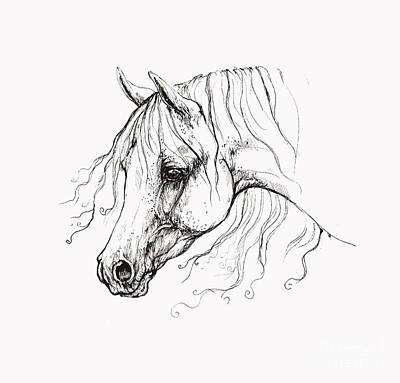 Animals Drawings - Arabian Horse Drawing 13 by Angel Ciesniarska