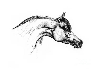 Animals Drawings - Arabian Horse Drawing 30 by Angel Ciesniarska