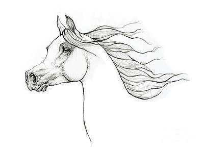 Animals Drawings - Arabian horse head 2020 10 01 by Angel Ciesniarska