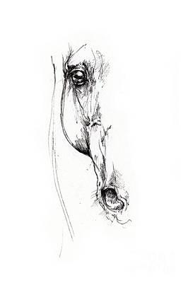 Animals Drawings - Arabian horse sketch 2014 05 24 d by Angel Ciesniarska