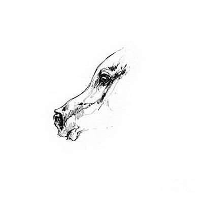 Animals Drawings - Arabian horse sketch 2014 05 24 g by Angel Ciesniarska