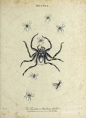 Vintage Chevrolet - Aranea Spiders f1 by Historic illustrations