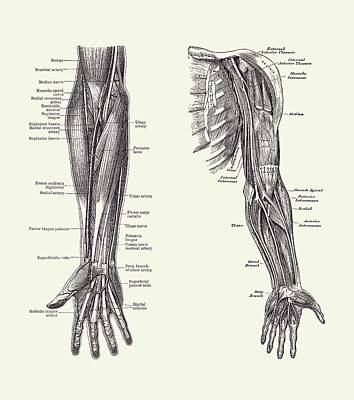 Classic Christmas Movies - Arm and Hand Diagram - Dual View - Vintage Anatomy 2 by Vintage Anatomy Prints