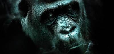 Digital Art - Art - Angry Gorilla by Matthias Zegveld