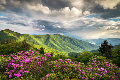Landscapes Royalty-Free and Rights-Managed Images - Asheville NC Blue Ridge Parkway Spring Flowers by Dave Allen