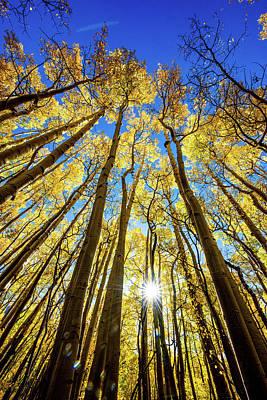 Edward Hopper - Aspen Tree burst by Greg Wyatt