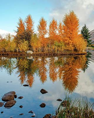 Wilderness Camping - Aspen Dreams - Colorado Landscape by Gregory Ballos