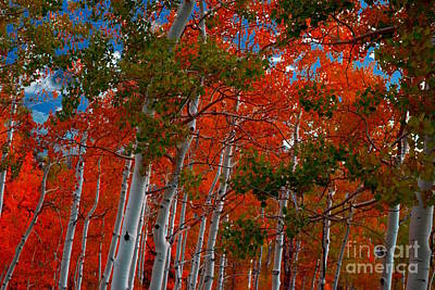 Photograph - Aspen Tree's-Fall Leaves by Sherry Little Fawn Schuessler