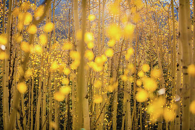 Photograph - Aspen Glow by Tamara Susa