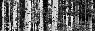 Photograph - Aspen Panoramic-mccall Idaho Black And White by Laurel McFarland