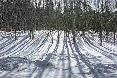 Photograph - Aspen Shadows by Douglas Wielfaert