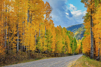 Door Locks And Handles Rights Managed Images - Aspen Trees along a Quiet Road 1 Royalty-Free Image by Rob Greebon