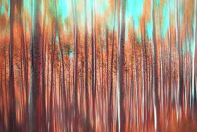 Royalty-Free and Rights-Managed Images - Aspen Trees Autumnal Abstract  by Carol Japp