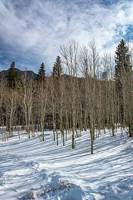 Photograph - Aspens In The Winter by Douglas Wielfaert