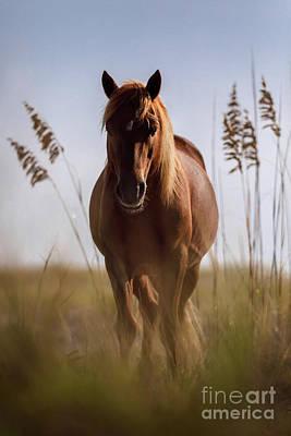 Photograph - Assateague Stallion by Shelley Paulson
