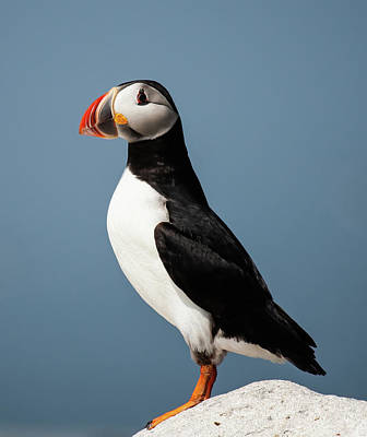 Lori A Cash Royalty-Free and Rights-Managed Images - Atlantic Puffin On Edge of Rock by Lori A Cash