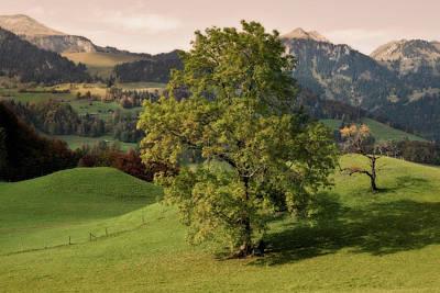 Garden Fruits - Autum Tree by Harri Hofer