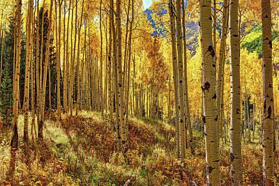 Keith Richards - Autumn Aspen Colorado Forest   by OLena Art - Lena Owens