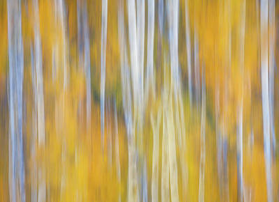 Mellow Yellow - Autumn Awakening by Darren White