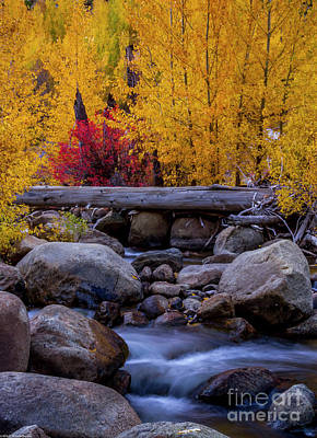 Sean - Autumn Carson River by Mitch Shindelbower