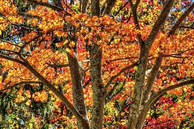 Personalized Name License Plates -  Autumn Colours Sleepy Hollow  by David Pyatt