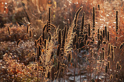 Rights Managed Images - Autumn Grass Mixed Border 8 Royalty-Free Image by Jenny Rainbow