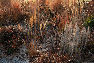 A White Christmas Cityscape - Autumn Grass Mixed Border by Jenny Rainbow