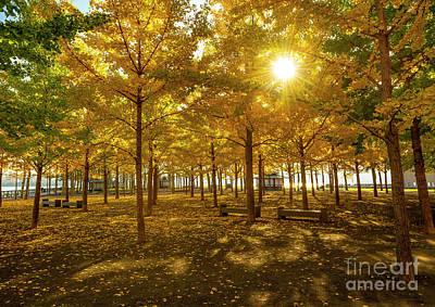 Farmhouse Royalty Free Images - Autumn in Hoboken Royalty-Free Image by Reynaldo BRIGANTTY