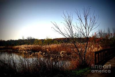 Frank J Casella Royalty-Free and Rights-Managed Images - Autumn Landscape Wetlands Bridge by Frank J Casella