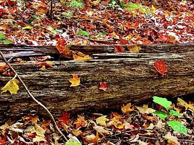 Photograph - Autumn Leaves by Cornelia DeDona