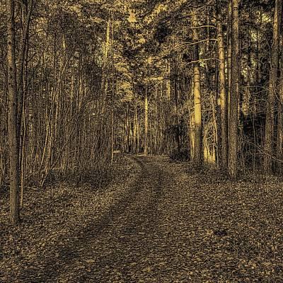 Grace Kelly - autumn light BW #j3 by Leif Sohlman