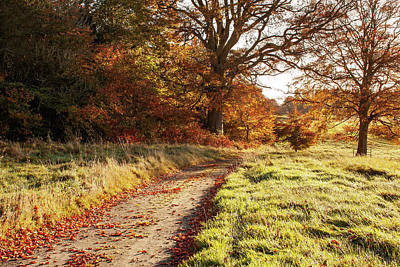 Wilderness Camping - Autumn Morning Pathway - Conty Kildare, Ireland by Barry O Carroll