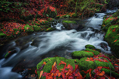 Photograph - Autumn River 1 by Francisco Crusat