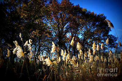 Frank J Casella Royalty-Free and Rights-Managed Images - Autumn Splendor by Frank J Casella
