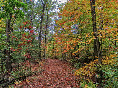 Up Up And Away - Autumn Trail in North Beverly by Scott Hufford