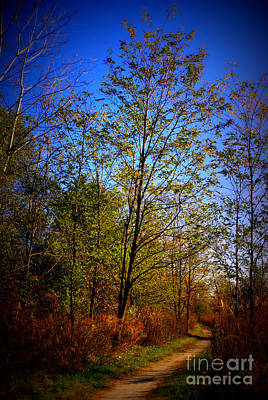 Frank J Casella Royalty-Free and Rights-Managed Images - Autumn Tree Along the Trail by Frank J Casella